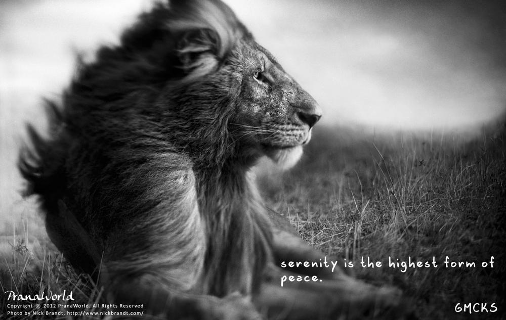 Mcks Quote Serenity