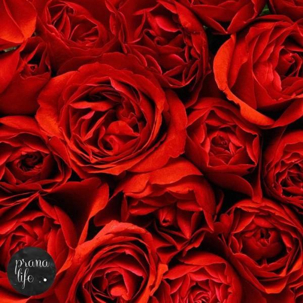 Rose Oil 102